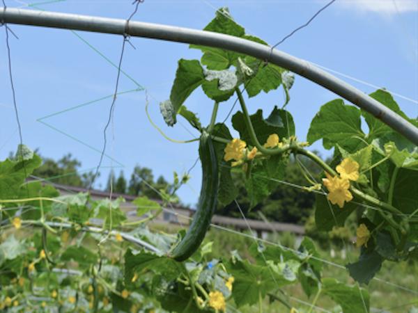 福島から見つめる日本の農業のあり方・がんばろう福島、<br/>農業者等の会代表齊藤登さんインタビュー[1/3]