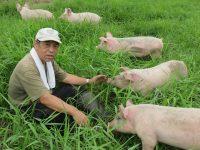 「動物と自然に暮らす牧場を作りたい」遊牧舎 秦牧場の放牧養豚【ファームジャーニー :北海道十勝】
