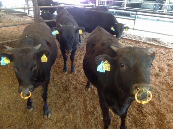 ブランド牛で世界へ挑む!尾崎宗春さんの「牛飼いの哲学」【ファームジャーニー:宮崎市】