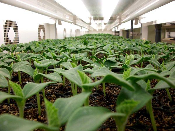 野菜の苗を手掛けるベルグアースに聞く「計画生産と苗づくりの最前線」