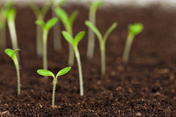 """今注目されているのは、有機農法でも使える""""微生物農薬"""""""
