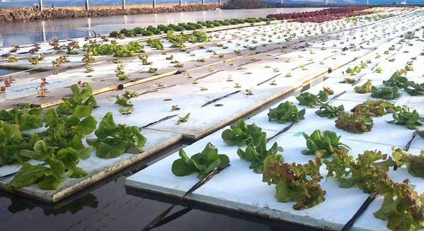 新規就農者・シニアにも最適 地域活性化やコミュニティの場としても水田に期待