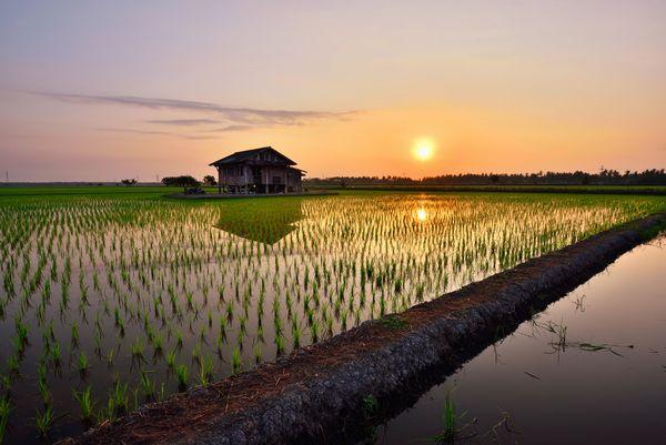 洪水を防ぎ、地域コミュニティの場となる。水田が私たちの生活にもたらす影響とは?