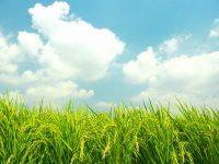 農家の経験と勘に匹敵!? 気象ビッグデータが拓く「未来の農業」