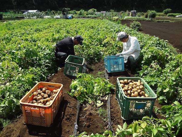 元大手企業の同期3人が55歳で早期定年退職して就農