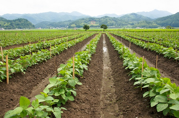 就農までにかかった期間:20代の約半数が1年半以内に就農