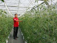 タイで高糖度トマトを栽培「農業テクノロジーで事業課題を解決」銀座農園の挑戦
