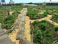 都会の真ん中で畑作り! 東京・大阪「都市部の貸し農園」5選
