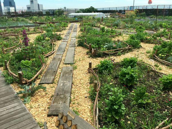 都会の真ん中で畑作り!東京・大阪「都市部の貸し農園」5選