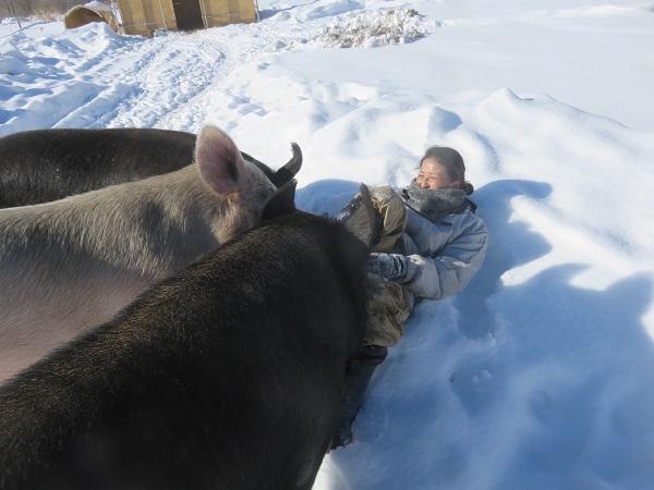 遊ぶたは雪が積もる冬でも、なんのその。外で元気に遊びます