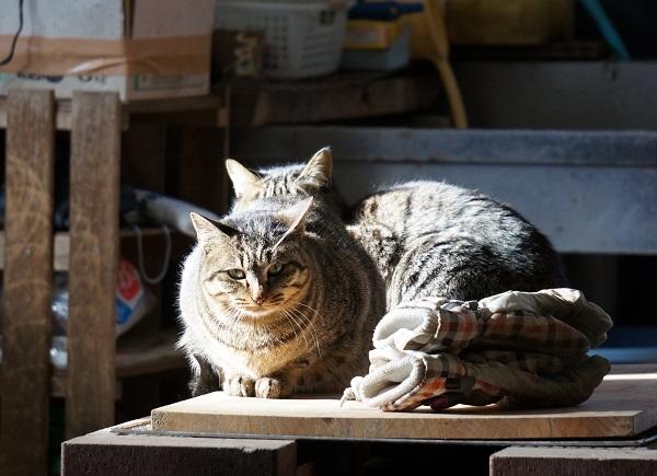 野良猫だけど毎食ごはんをねだりにやってくる、猫の親子。 子猫は蛇を丸ごと食べる野生っぷりを発揮したそう