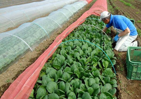 早期定年退職で未経験の3人が農業にチャレンジ【やりがい編】