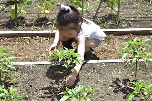 【元麻布農園】親子で畑を耕し有機肥料について学ぶ 野菜作り無料体験会