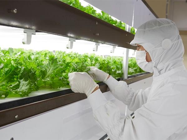 東京メトロが野菜作り!? 高架下の野菜工場で育った「とうきょうサラダ」