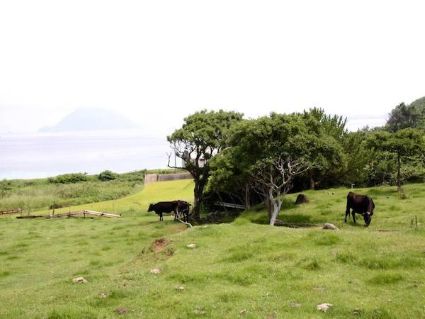 宇久島 若手畜産農家が担う「牛の島」の未来
