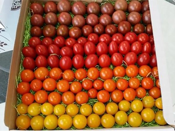 「成功する」農業のしくみを見える化して新規参入をサポート!銀座農園