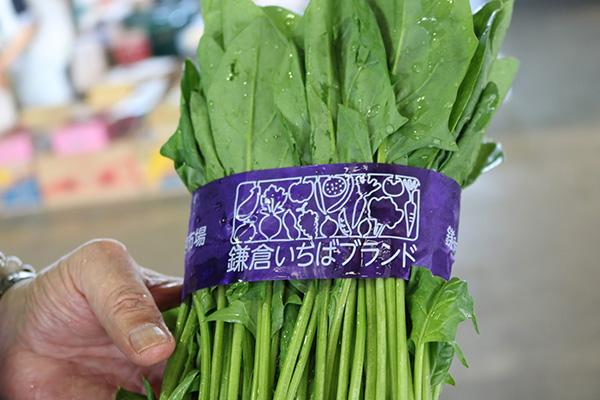 市場が取り組む野菜のブランド化【市場に行こう!鎌倉青果地方卸売市場】