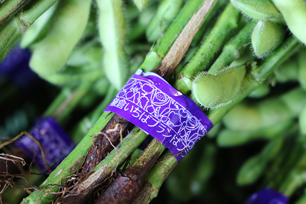 鎌倉の住民に求められる高品質な野菜、それを作る農家