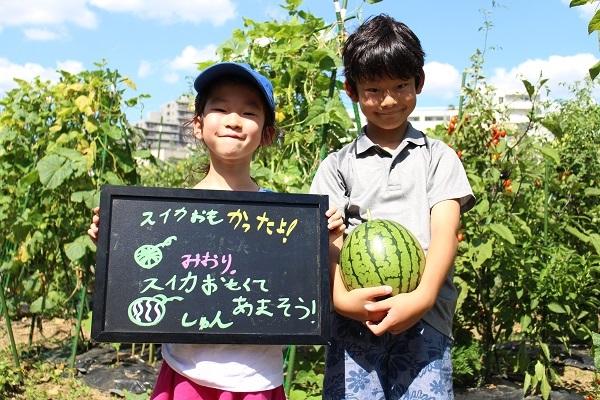 【アグリパーク伊勢原】旬の野菜を収穫 新鮮食材使用のバーベキューで自然と触れ合う