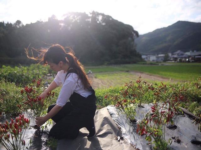 100年続く味を残したい。佐賀県で続く、唯一の味を持つ唐辛子。