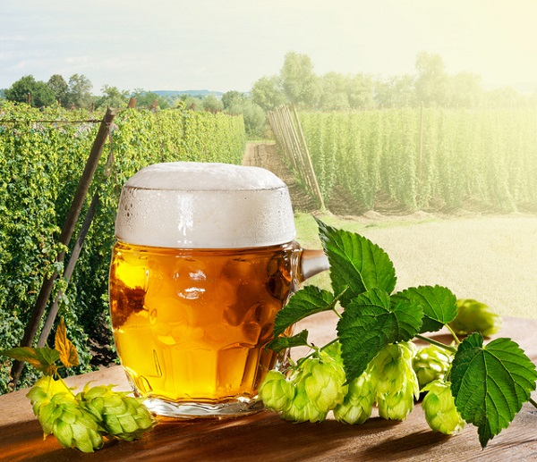 農作業のためのビール?!「セゾンビール」の歴史と魅力に迫る