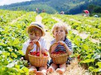 野菜作りに収穫体験、都会でも体験できる「夏休みの農園関連イベント」