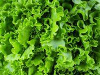 ソフトバンク・ビジョン・ファンド、屋内野菜工場ベンチャーへの2億ドル(約220億円)の投資を主導
