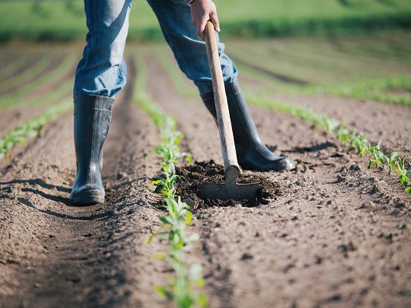 就農地の選び方から心積もりまで 就農希望者の実態と直面する悩みとは