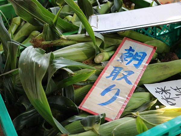 競りがこだわりの野菜を支える【市場に行こう!鎌倉青果地方卸売市場】