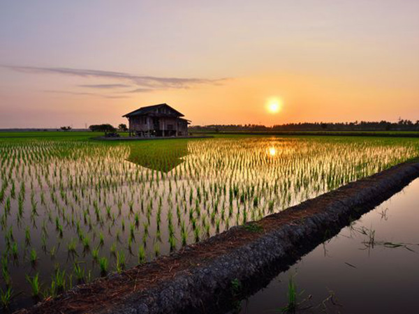洪水を防ぎ、地域コミュニティの場に。水田が生活にもたらす影響とは?