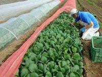 早期退職で未経験の3人が農業にチャレンジ【やりがい編】