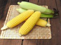 8月の旬野菜、かぶりつきたくなる「トウモロコシ」。収穫後が一番美味しいわけとは