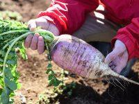 自分の名を冠するブランド野菜を作る【ファーマーズファイル:苅部博之】