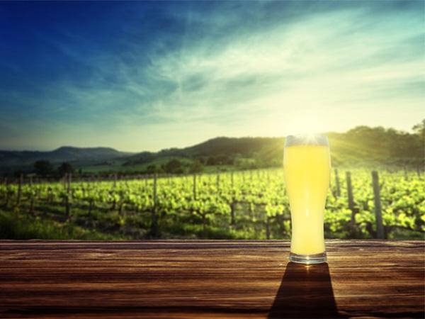 肥料になる?ビール酵母の驚くべき効果