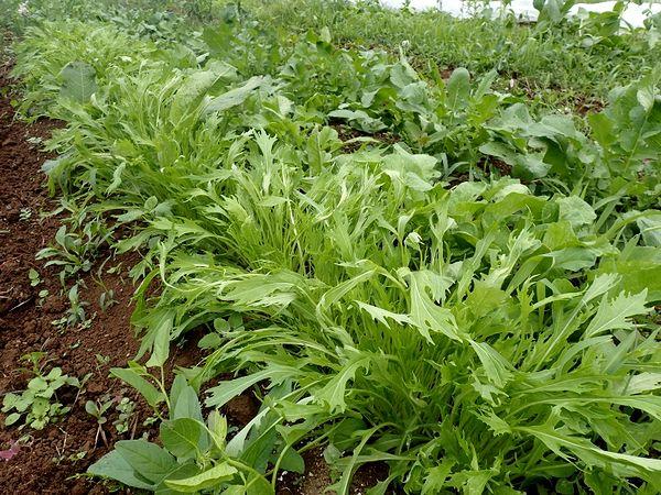 「農楽里ファーム」で取り組む有機・無農薬・自然農法