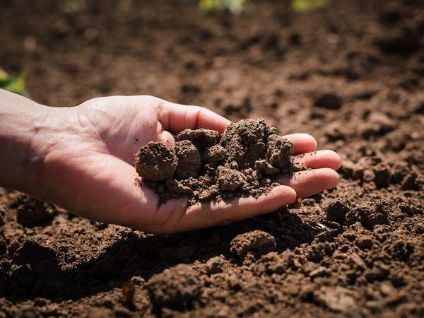 土作りのプロへ 「土壌医・土づくりマスター・土づくりアドバイザー」資格試験とは