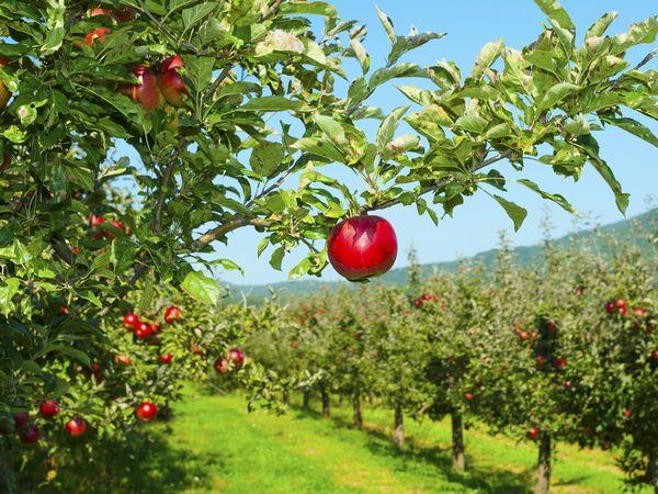 収穫の秋を体験 今すぐ行きたい観光農園4選:関東編