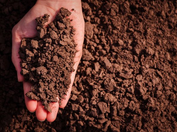 肥沃な土でおいしい作物に 農を助けるスーパー微生物「EM」とは