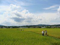 オーガニック視点で考える農業のススメvol.2 第二の「こうのとり米」を目指して!徳島県小松島市の取り組み