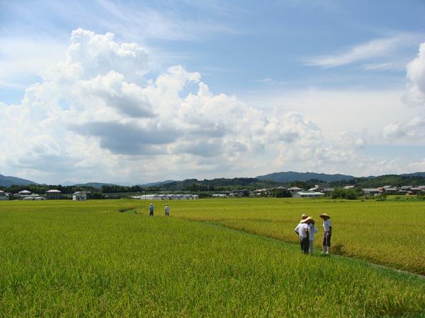 オーガニック視点で考える農業のススメvol.2: 第二の「こうのとり米」を目指して!徳島県小松島市生物多様性農業推進協議会の取り組み