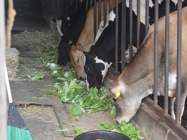 牛も人間も幸せな「家畜福祉」を追求する。