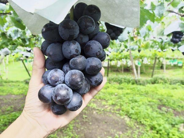 収穫の秋を体験 今すぐ行きたい観光農園5選:東北編