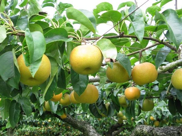 収穫の秋を体験 今すぐ行きたい観光農園5選:中国編