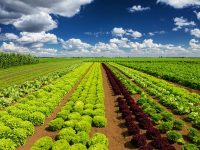 収穫の秋を体験 今すぐ行きたい観光農園5選:四国編
