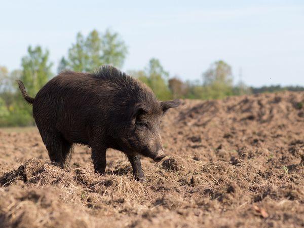スイカ畑が10年間の獣害から復活 野生動物対策の3つのポイント
