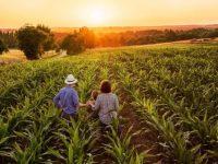 家業を継ぐ悩みを分かち合い、帰農を推進 「農家のこせがれネットワーク」