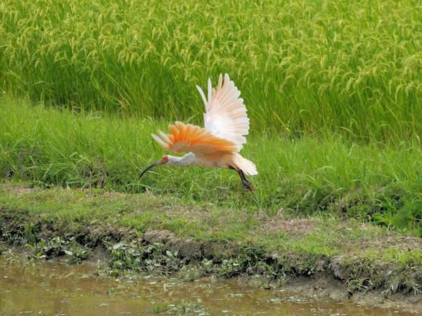 伝統的な農林水産業を残し 地域のブランド力を高める「世界農業遺産・日本農業遺産」