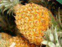 ほどよい甘味と酸味の南国フルーツ『パイナップル』を食べて暑さに打ち勝とう!