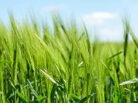 【第1回】より良い農業生産を実現する取り組み『GAP』ってなんだろう?