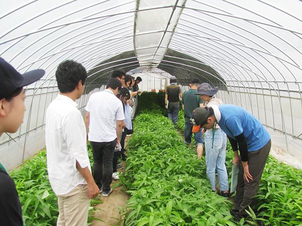 就農を検討している人に向けたイベント 【茨城】農場見学&就農相談会